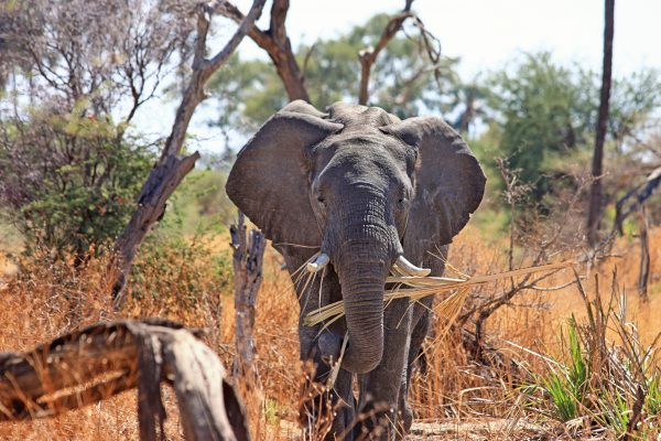 africa-animal-elephant-46507